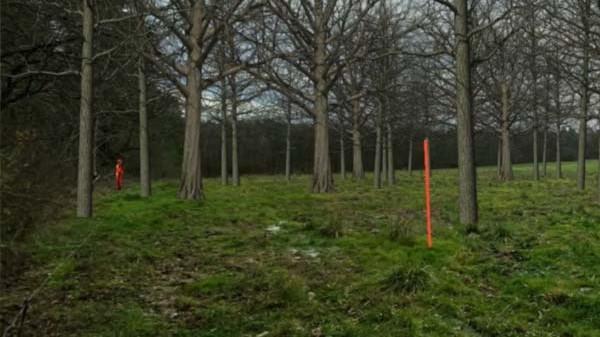Forêt chasse simulatir64